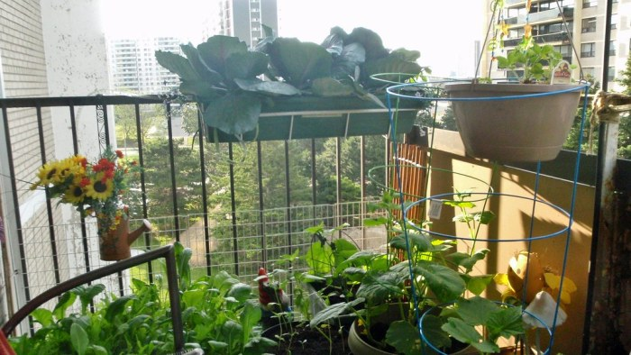 Balcony garden east