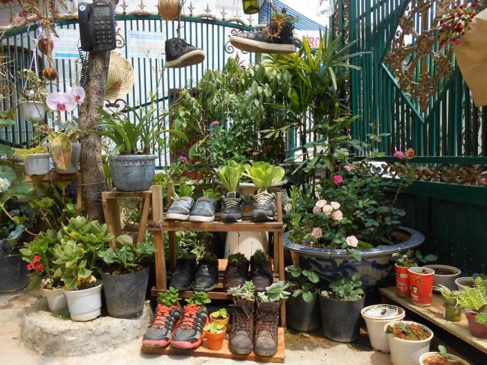 Những đôi giày cũ được tận dụng để trồng cây