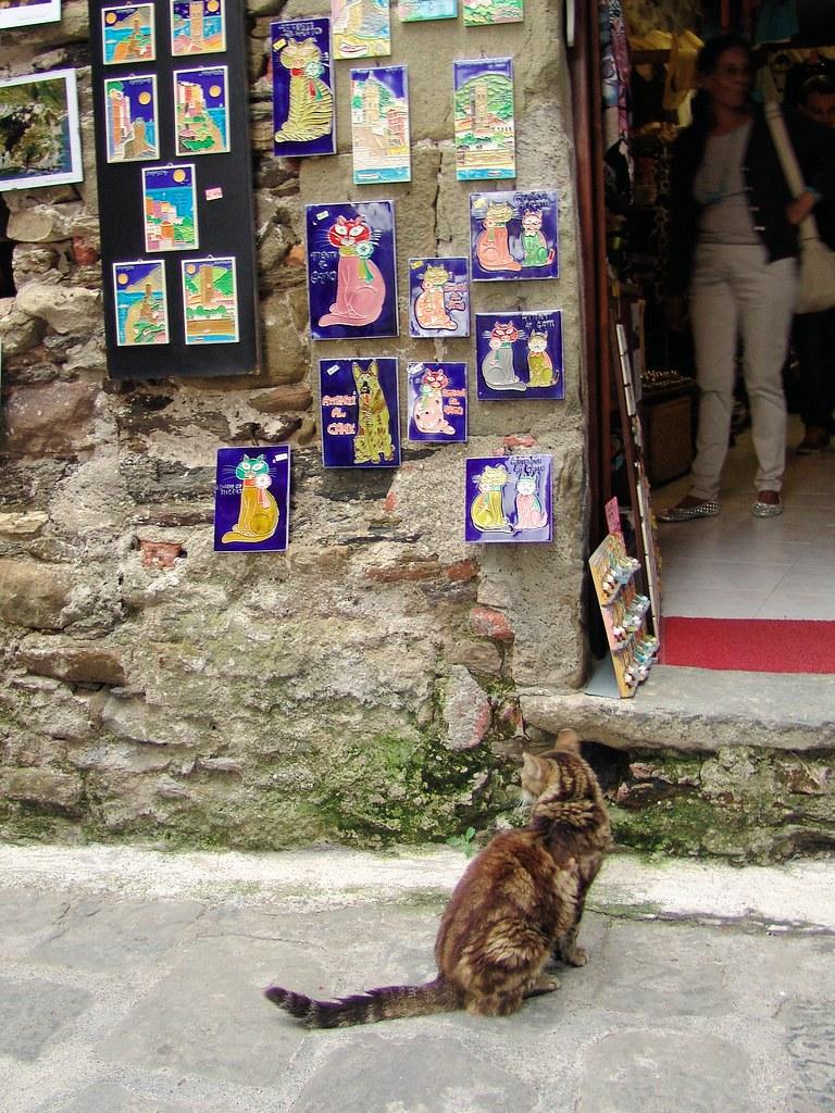 A cat's story, Corniglia