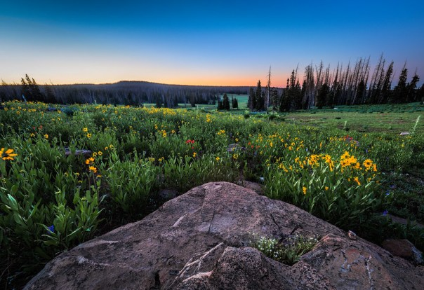 Flowers at daybreak