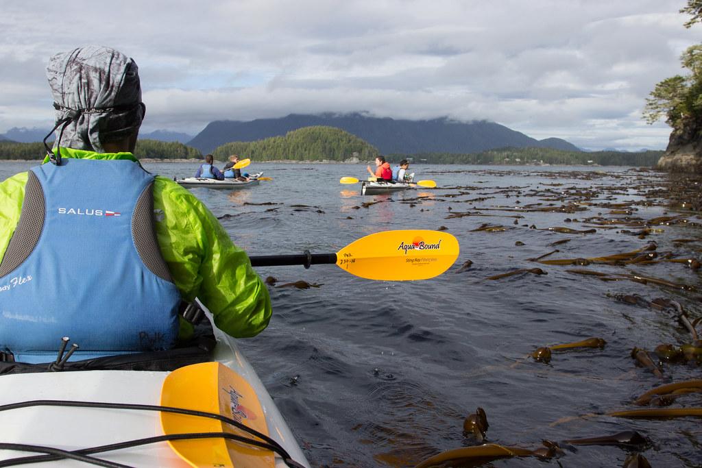paddling through kelp