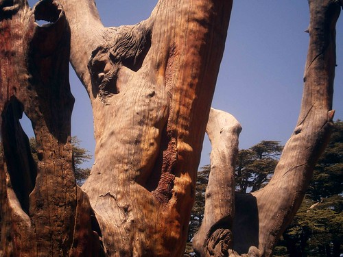 Jesus Tree Carving at Cedar of God