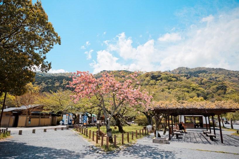 2015 April 京都嵐山 326