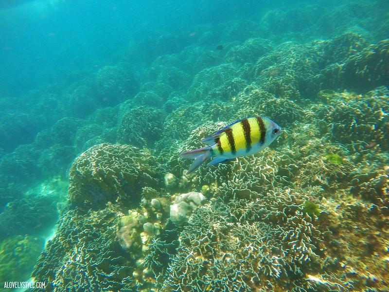 Snorkel Koh Lipe (2)
