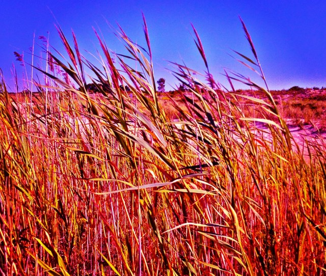Iphone Instagram Photo Gunnison Beach Reeds Sandy Hook Nj By Christian Montone