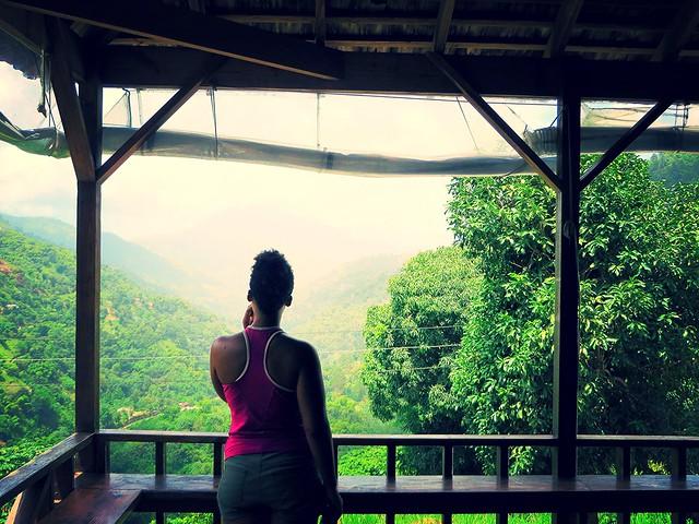 blue mountain, jamaica, caribbean cliche