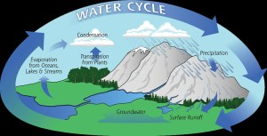 Water Cycle | Precipitation is a vital ponent of how