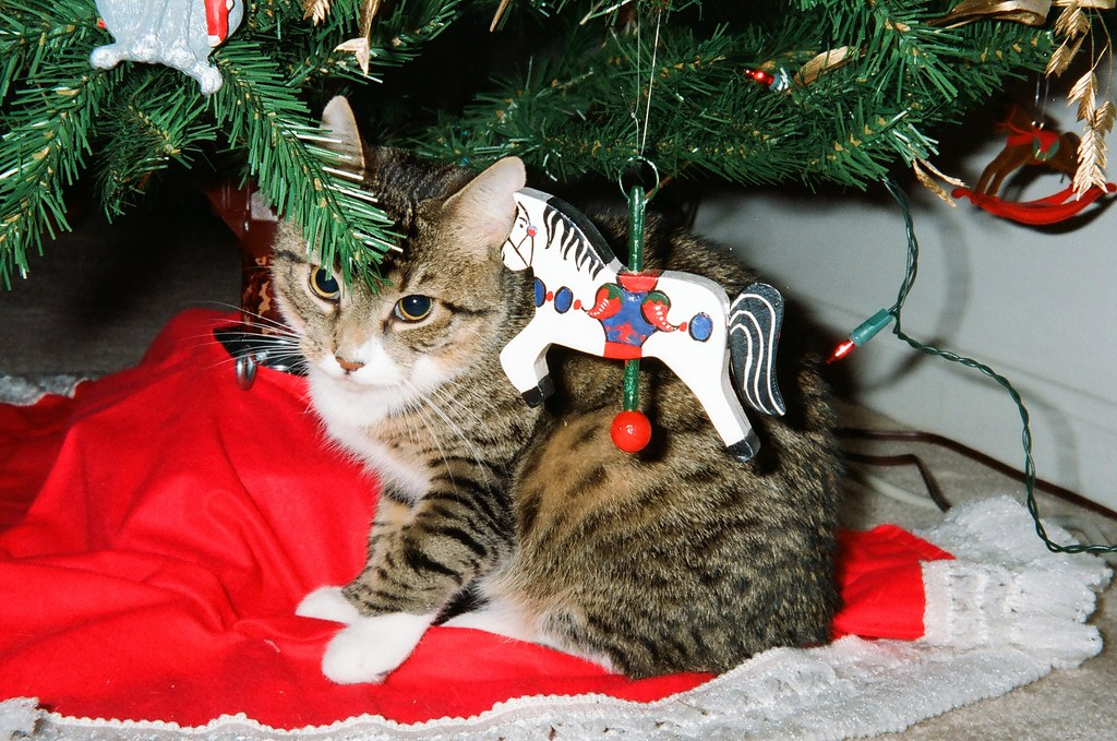 All Things Cats A Christmas Cat Under The Tree Joe