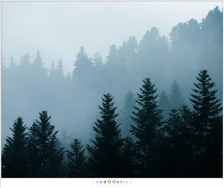 Mist en regen zorgen voor fantastische sfeerbeelden