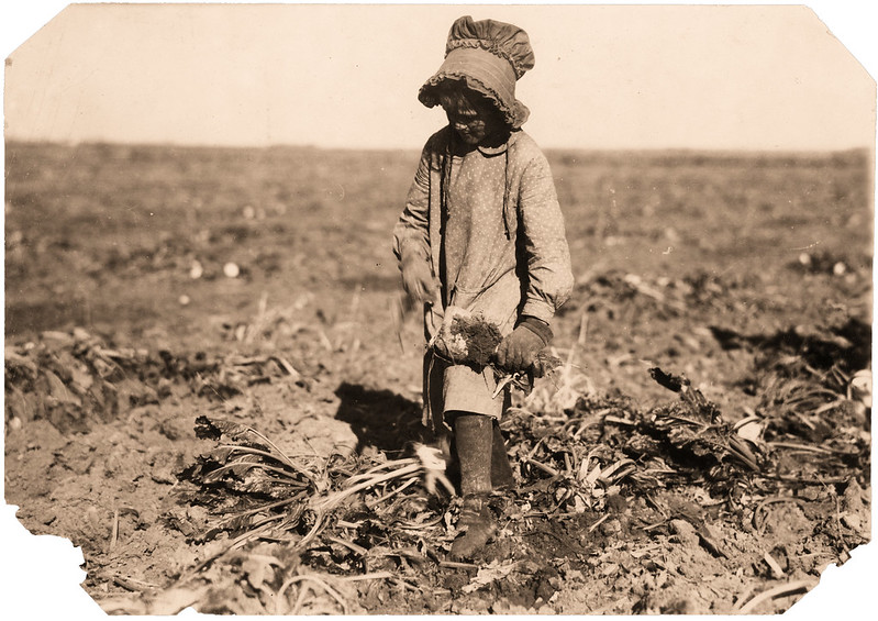 "Ten-year-old Mollie Steuben topping beets. Many children of this age put in a full day's work, and many begin younger. The work is hard and the children sometimes cut themselves or are ""hooked"" by the long tooth on the end of the blade. Mollie and her two sisters, 12 and 14 yrs. old, work from 6 A.M. to 5 P.M., near Sterling, Colorado, Oct. 21, 1915."
