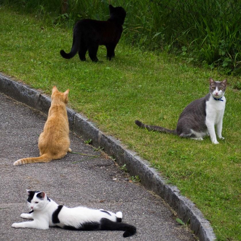 Troupeau de chats 3