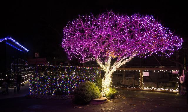 Folsom Zoo Christmas Light