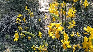 Kadisha Grotto Flowers