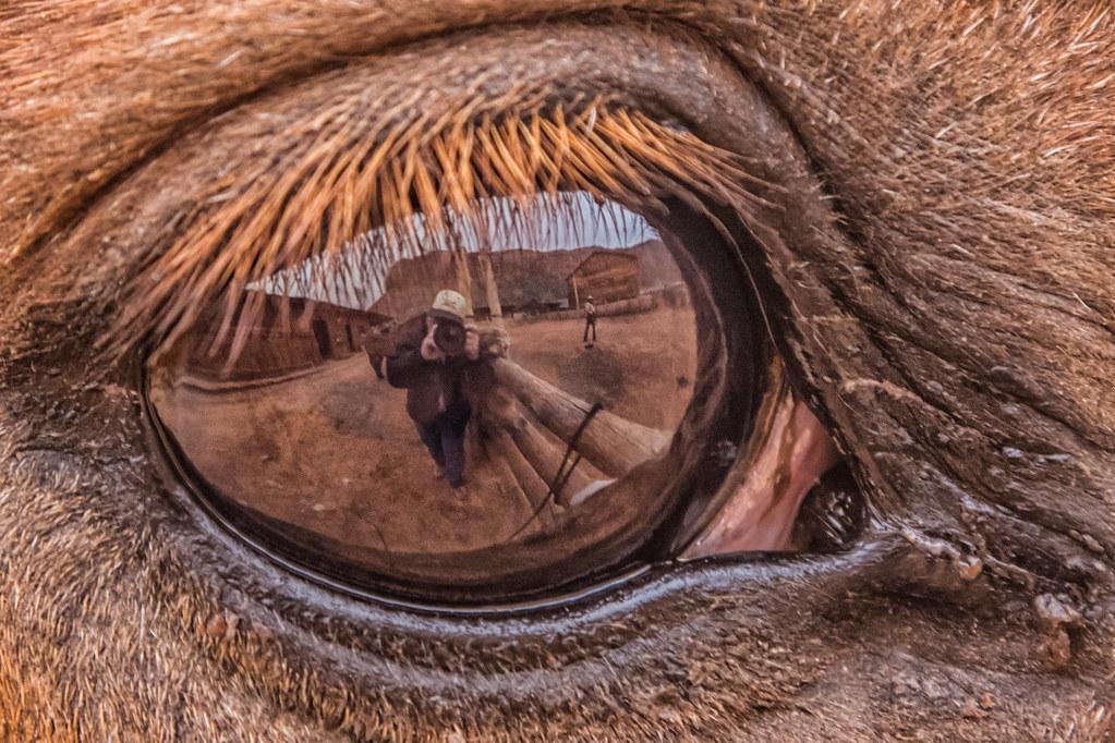 Work It Horse Eye Does How Bulls