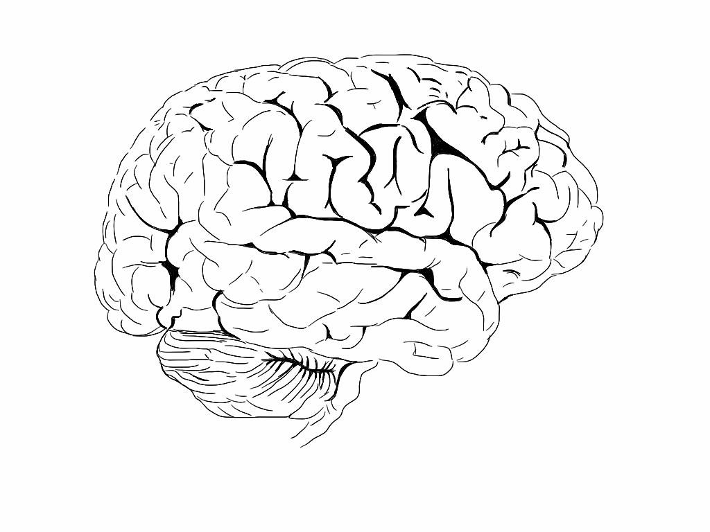 Brain Colouring Book