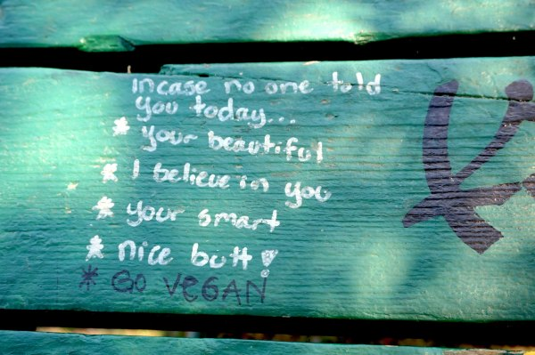 Picnic Table Graffiti | thelittleredspoon.com