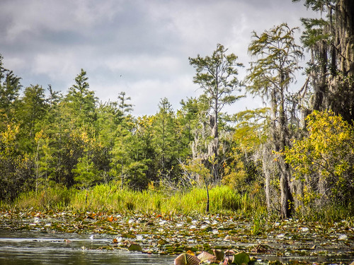Lowcountry Unfiltered at Okefenokee-241
