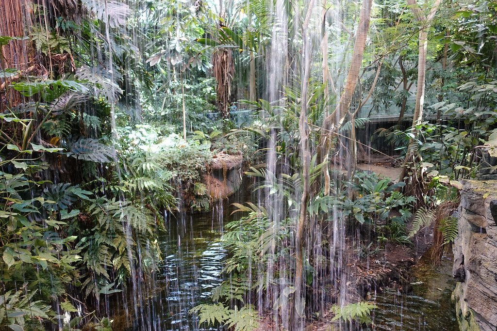 Tropical Rainforest Ecosystem Biod 244 Me Hochelaga Maison
