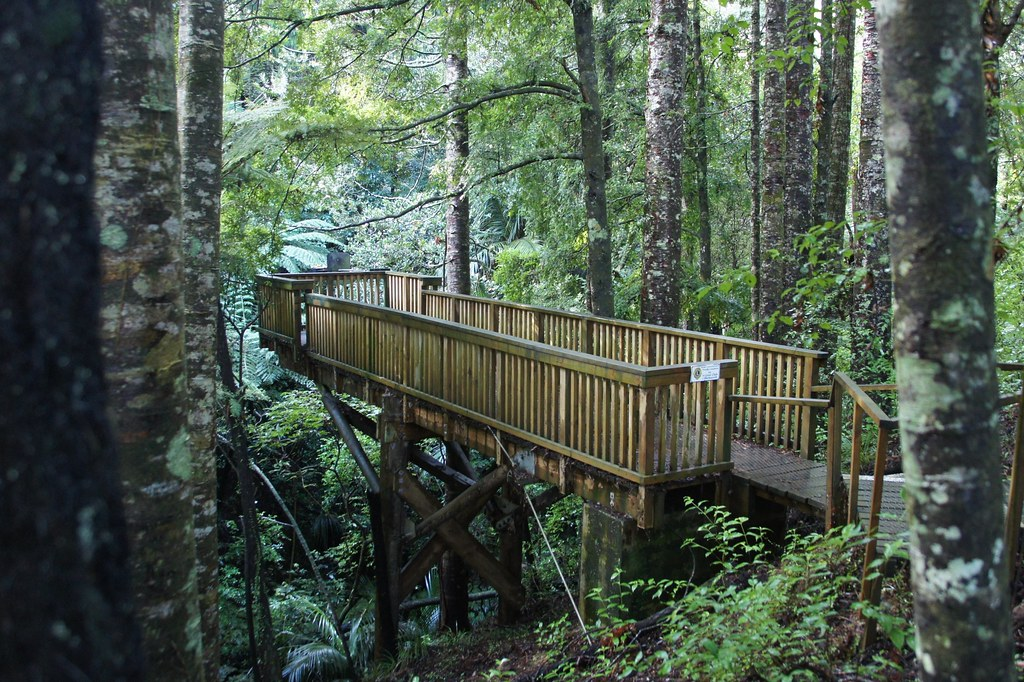 Parry Kauri Park ItravelNZ New Zealand In Your Pocket