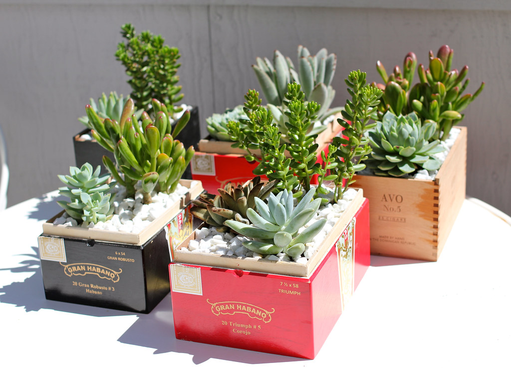Wedding Cigar Box Planters I Planted 2 3 Succulents In