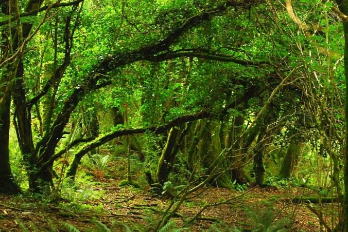 """Résultat de recherche d'images pour """"irish forest"""""""