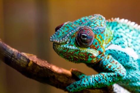 「chameleon karma」の画像検索結果