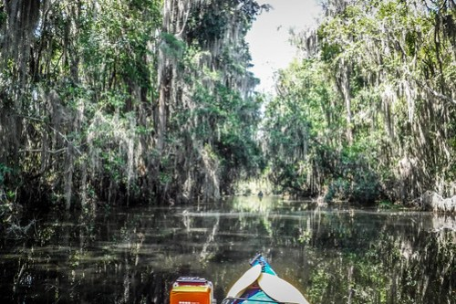 Lowcountry Unfiltered at Okefenokee-096