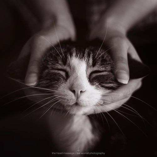 The Head Massage
