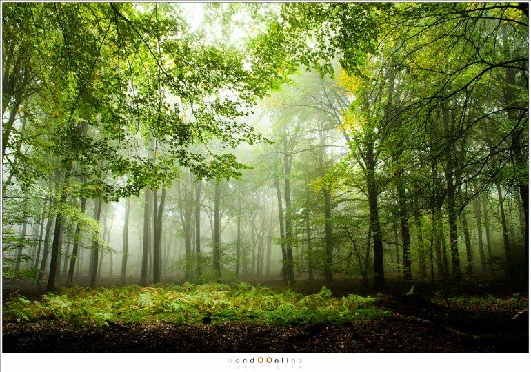 Een open plek in het Speulderbos, waar varen floreren. De herfst is nu nog ver te zoeken maar ligt al wel op de loer. (16mm; ISO100; f/11; t=2sec)