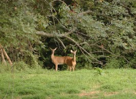 Photo of Deer At Edge of Forest