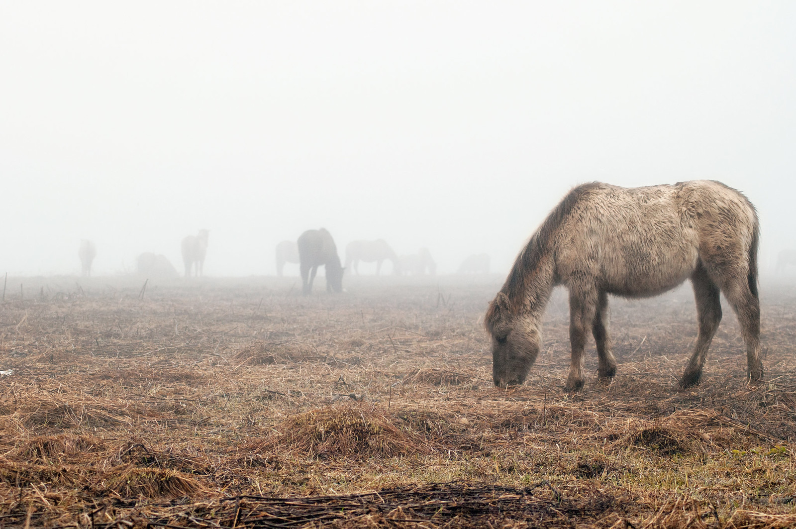 Horses in the fog 29.03.2015