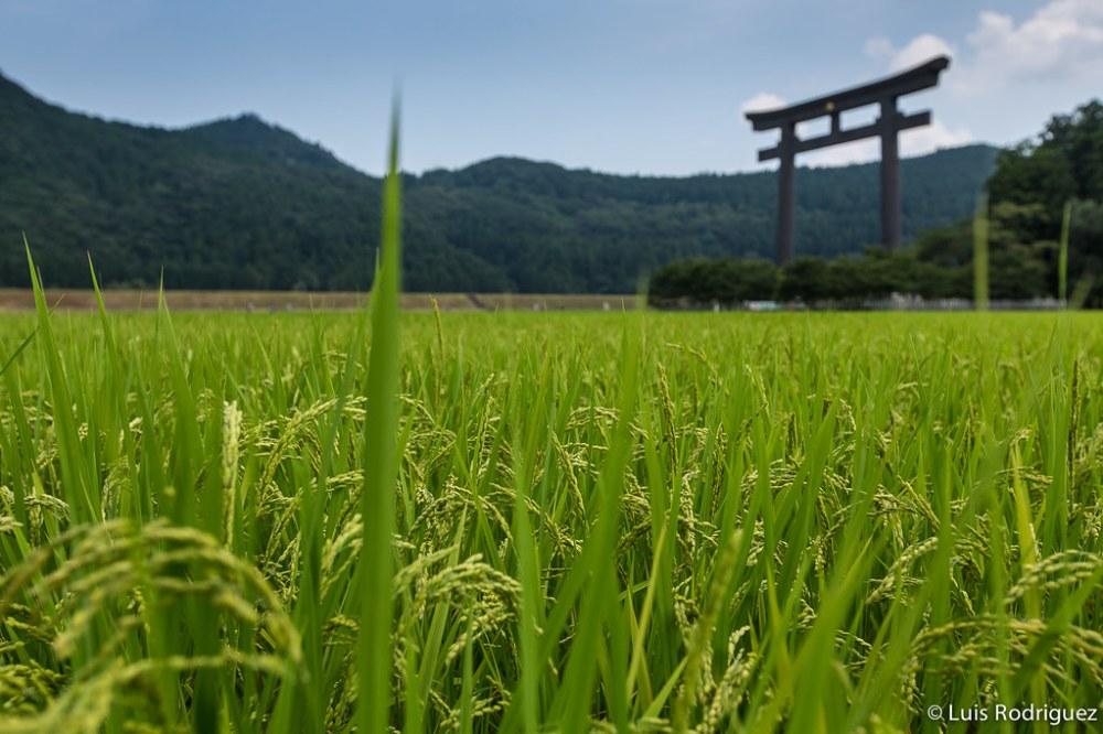 Hongu-Kumano-Kodo-95