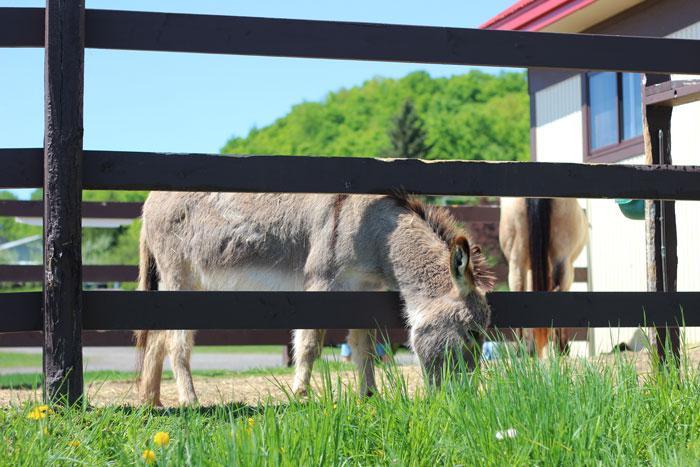 17_vergers-lafrance-chevaux