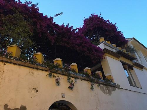 Barrio del Salvador, Sevilla