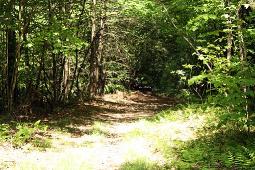 20150523_Camp_Creek_013