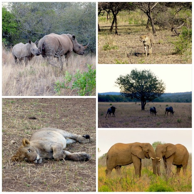 Big Five en Sudafrica