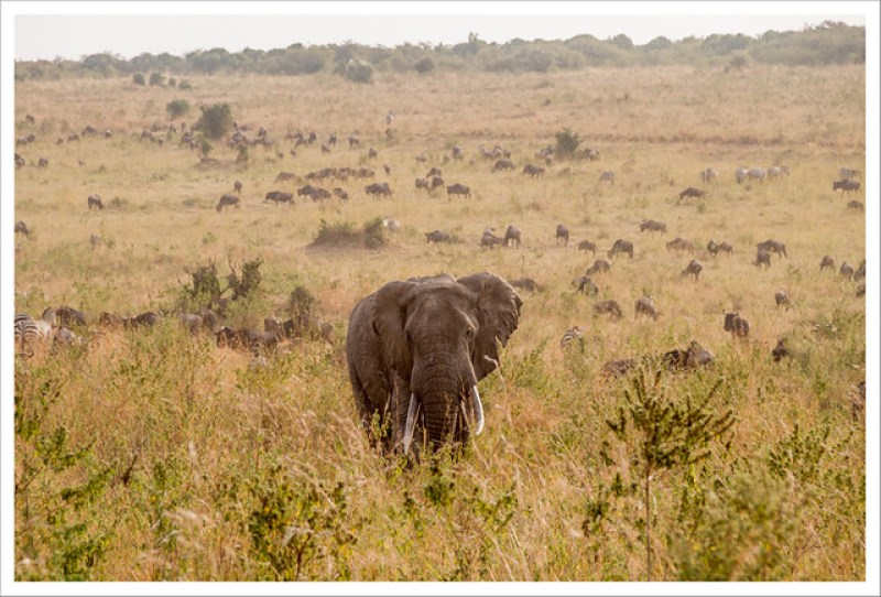 MasaiMara-67