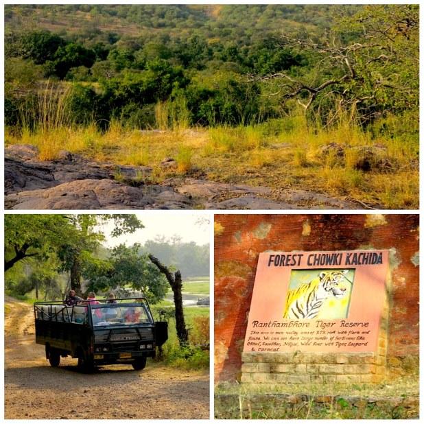 Ver tigres en Ranthambore