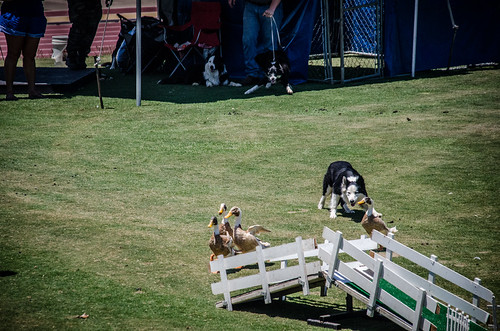2015 Scottish Games at Furman-162