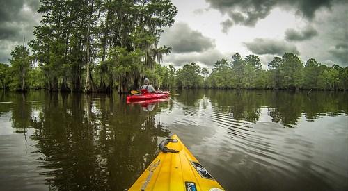 Sparkleberry Swamp-80