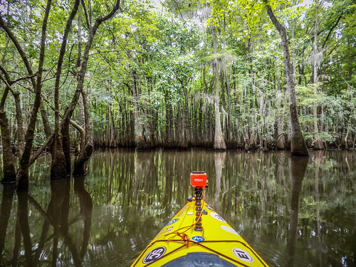 Sparkleberry Swamp-11