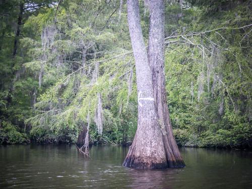 Sparkleberry Swamp-125