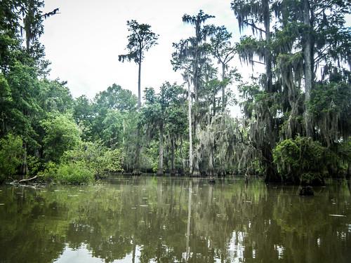 Sparkleberry Swamp-145