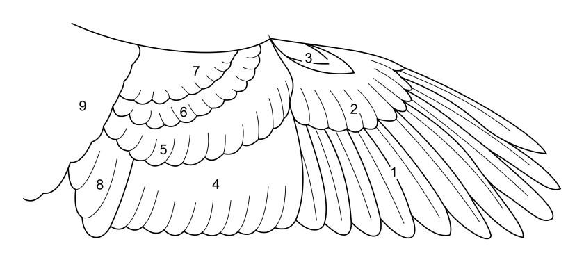 翼を構成する羽根の種類は9種類