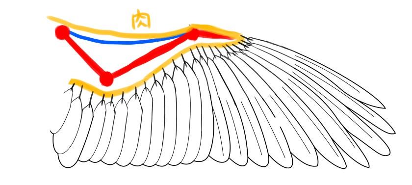 大きな羽の根元は肉に突き刺さっている