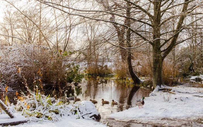 Lost Lagoon Winter