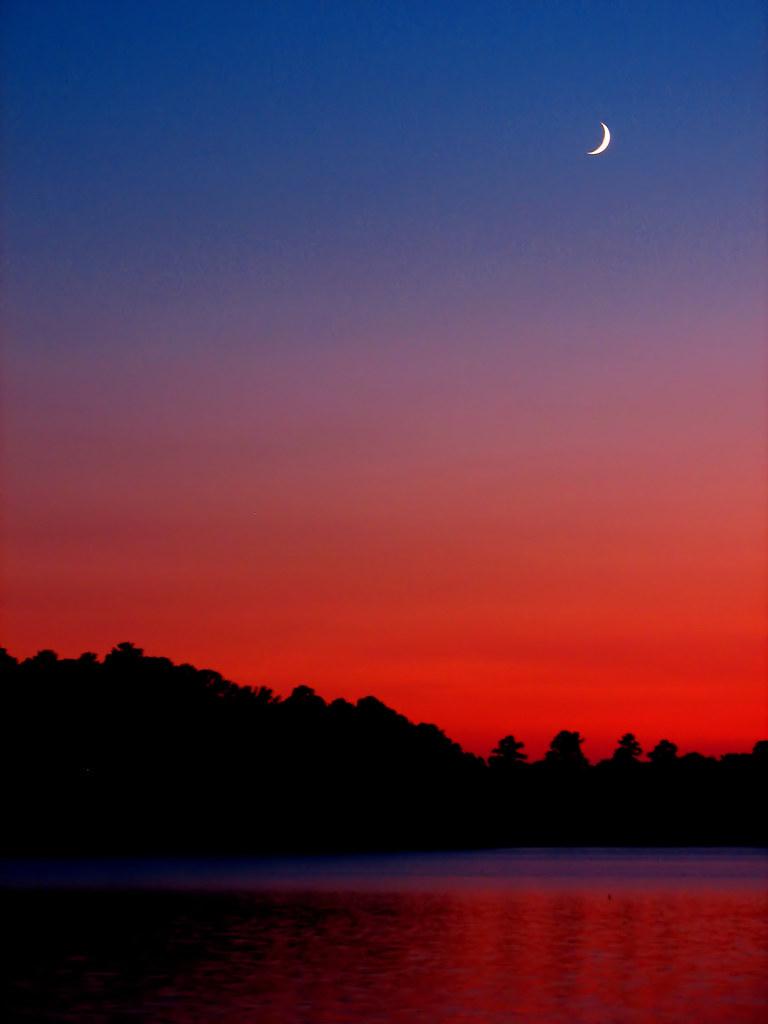 South Carolina Palmetto Tree And Moon Silhouette