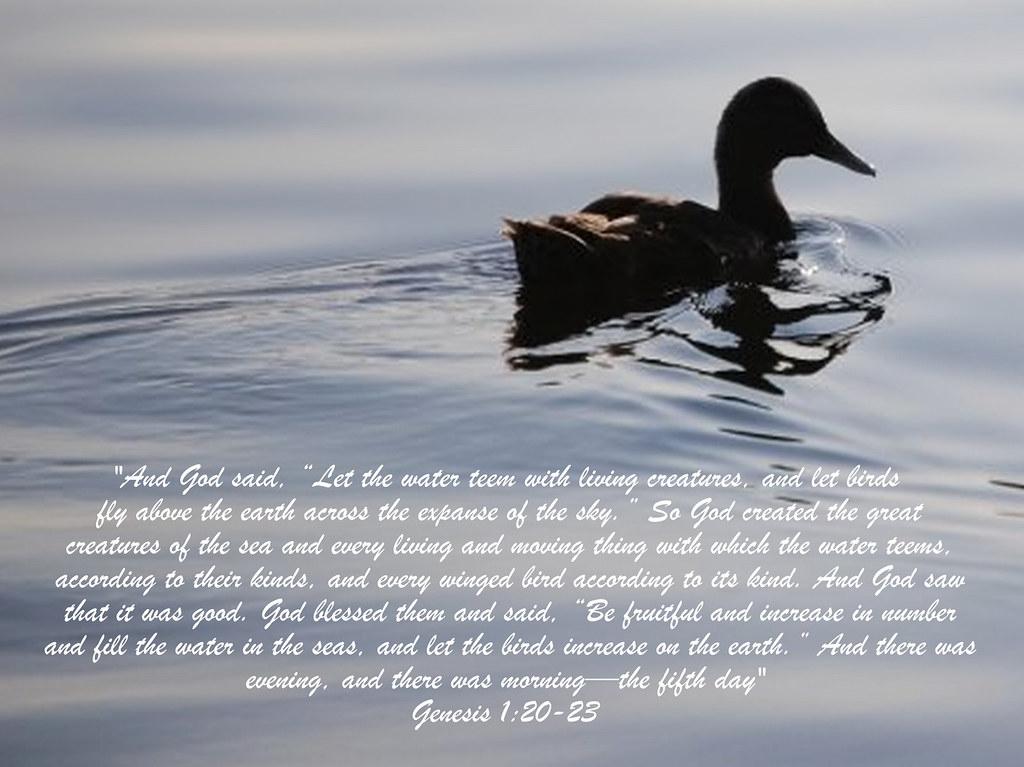 Genesis 1 20 23 Picture Scripture Teem 1 To Be Full Of