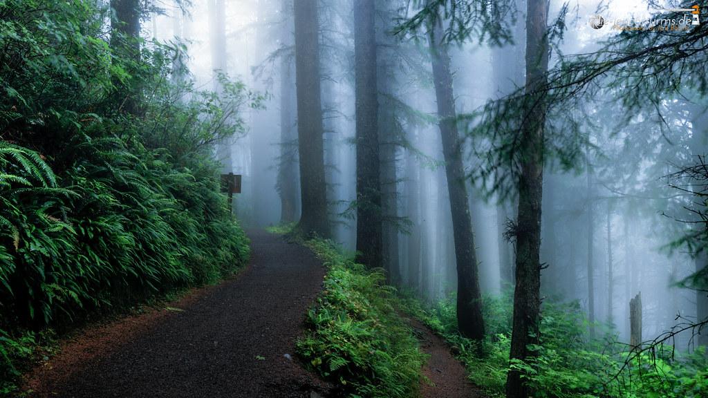 Through the temperate rainforest