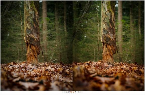 Zonder polarisatie (links) en met polarisatie (rechts) op een bewolkte dag in het bos. Het verschil in kleur is opmerkelijk te noemen.